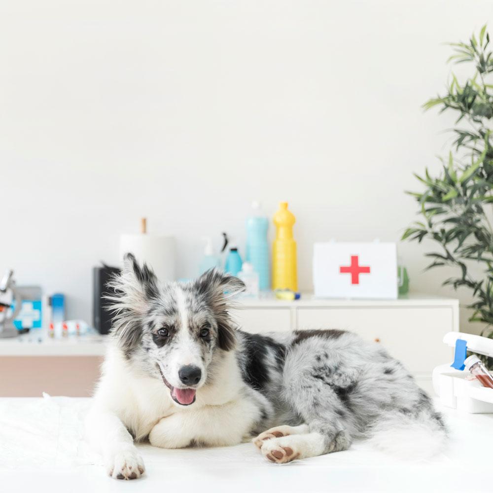medicinali-veterinari-animali-cani-gatti-farmacia-cavalcaselle-apoteke-farmacy-Ponti-Monzanbano-Sirmione-Pacengo-Lazise-Salionze-Valeggio-Castelnuovo-del-Garda-Peschiera-del-garda